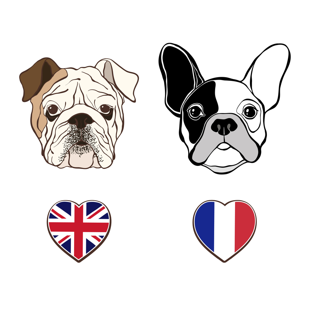 Difference between French Bulldogs and English Bulldogs