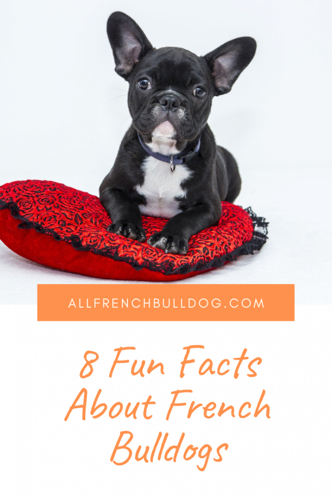 8 Fun Facts About French Bulldogs