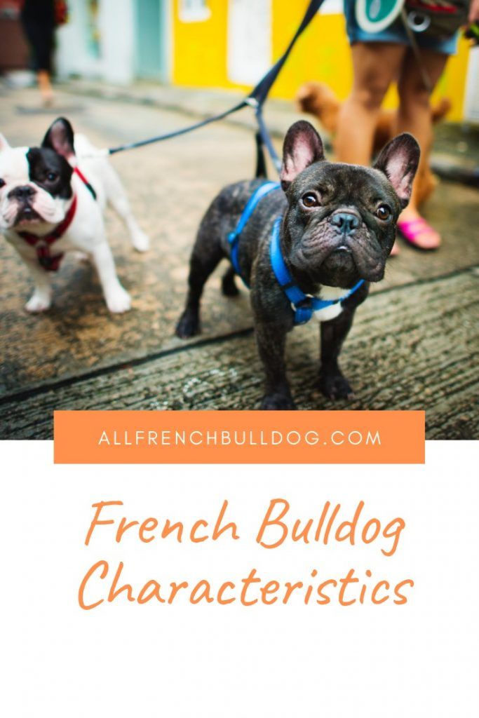 French Bulldog Characteristics