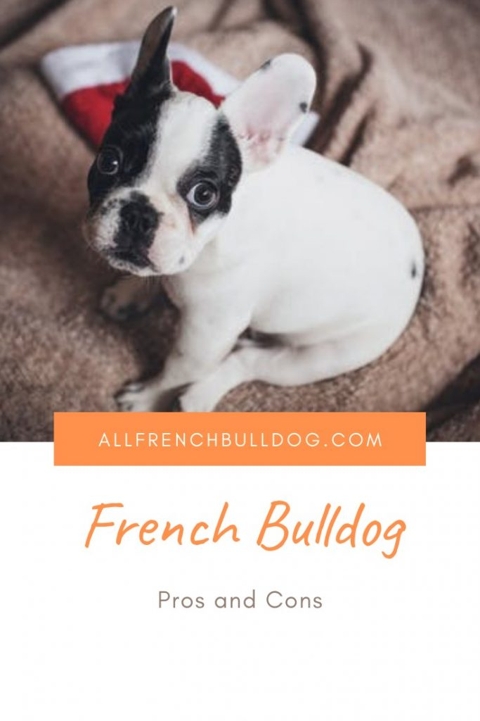 French Bulldog pros and cons