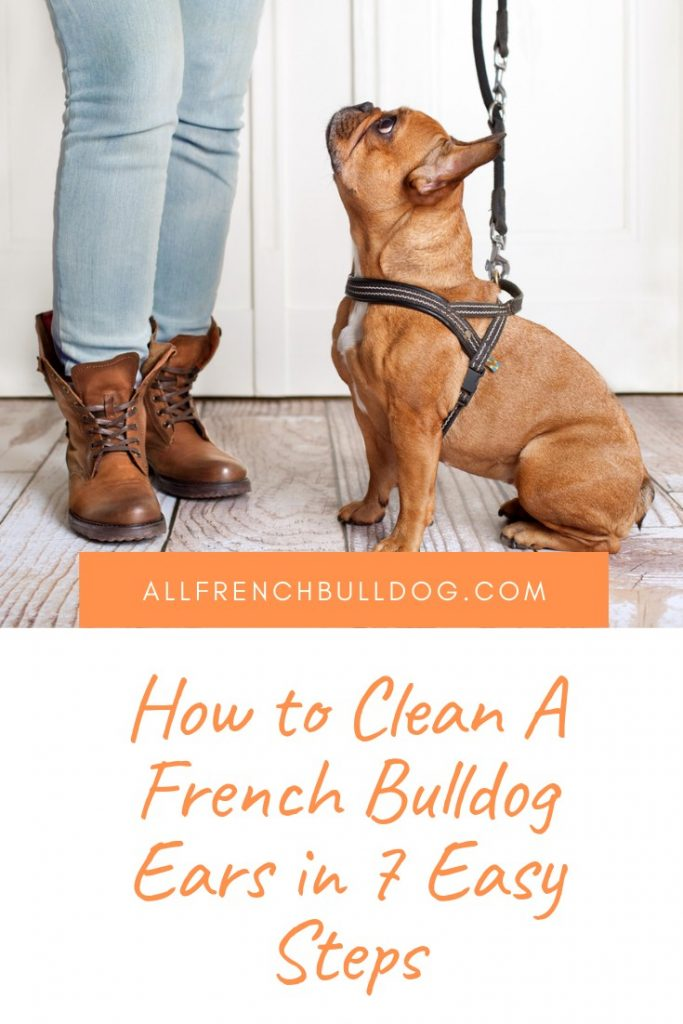 How to Clean A French Bulldog Ears in 7 Easy Steps