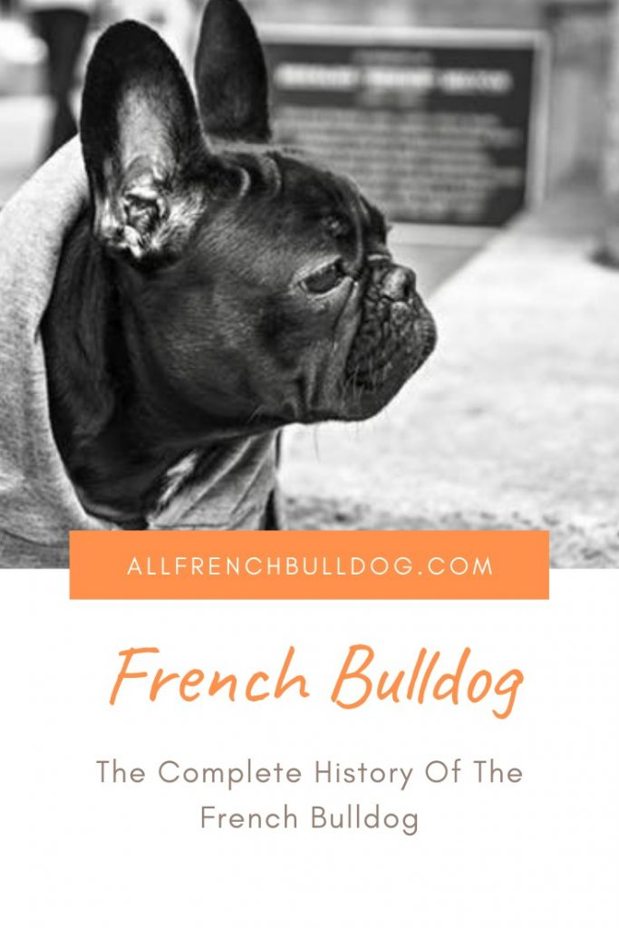 The Complete History Of The French Bulldog