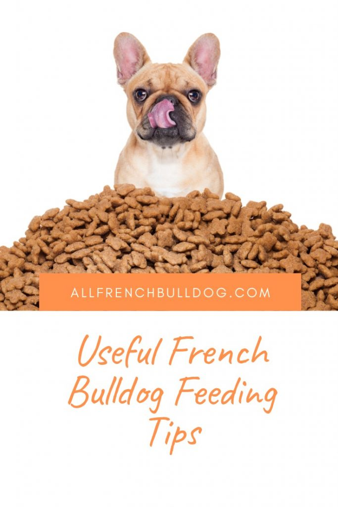 Useful French Bulldog Feeding Tips