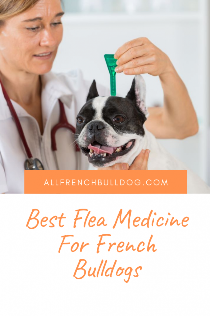 Best Flea Medicine For French Bulldogs