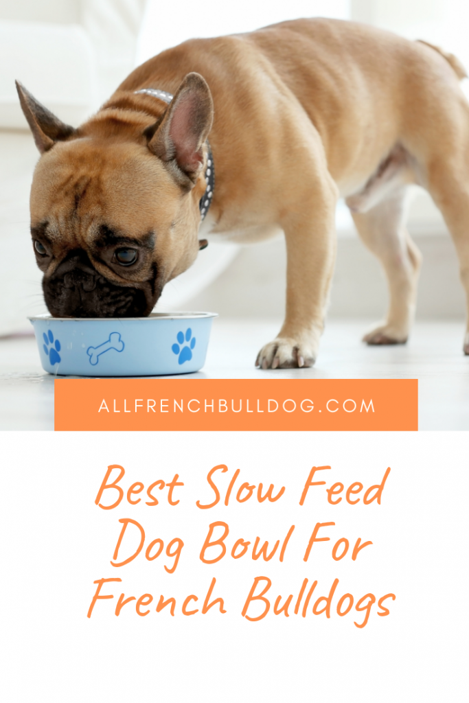 Best Slow Feed Dog Bowl For French Bulldogs