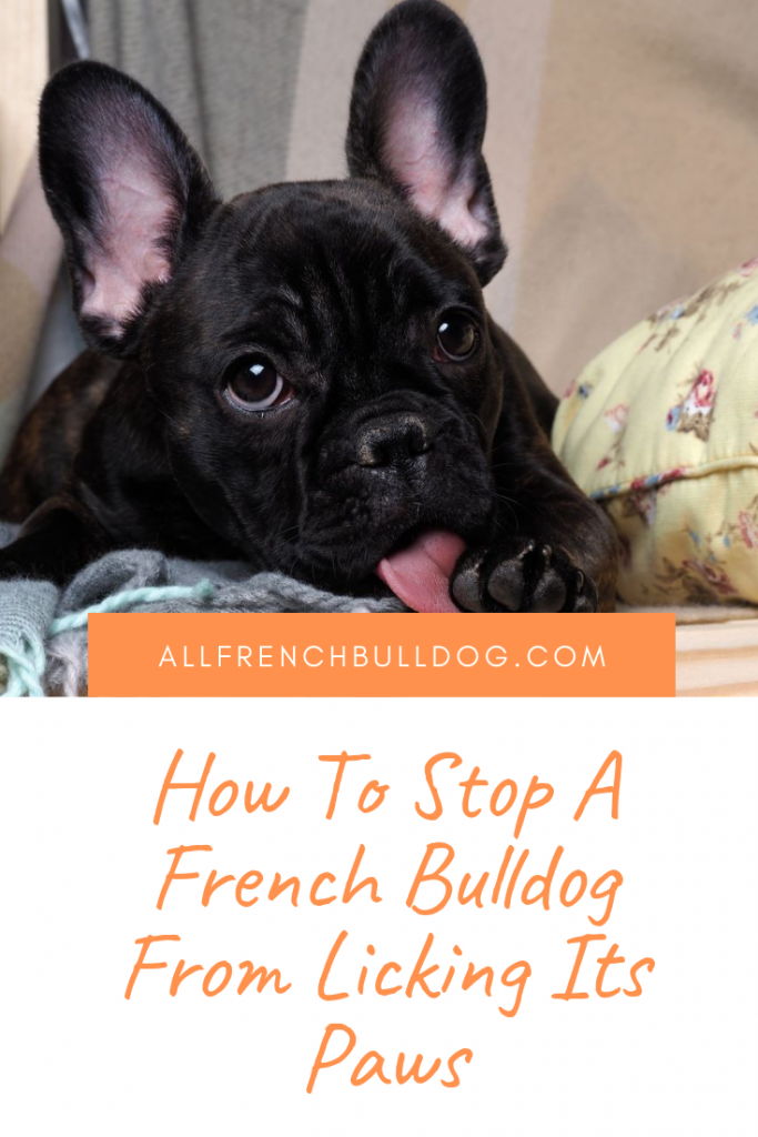 how to stop french bulldog licking paws