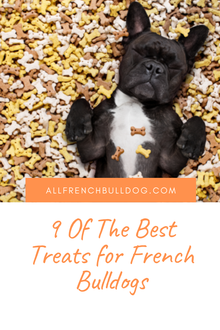9 Of The Best Treats for French Bulldogs