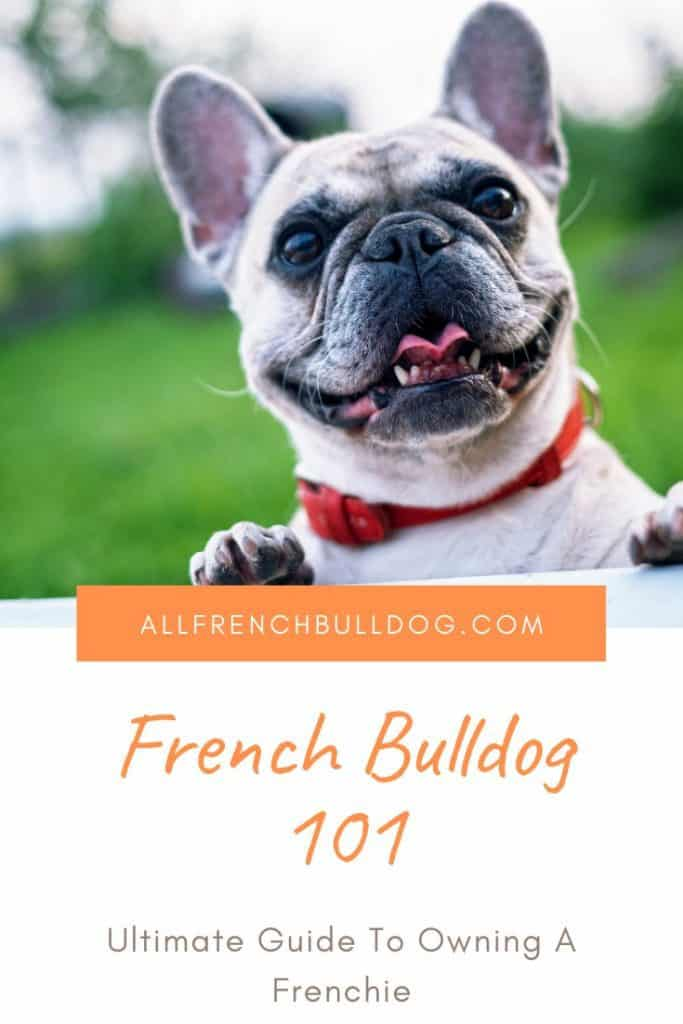 French Bulldog 101