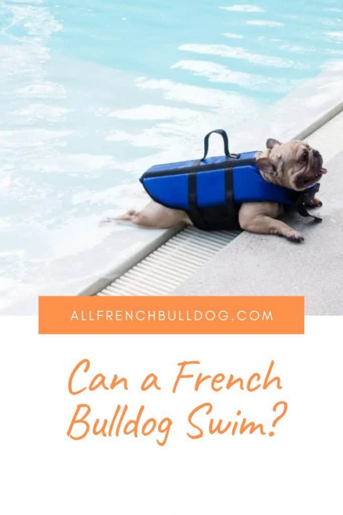 Can a french bulldog swim