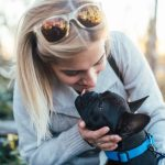 French Bulldog Therapy Dog