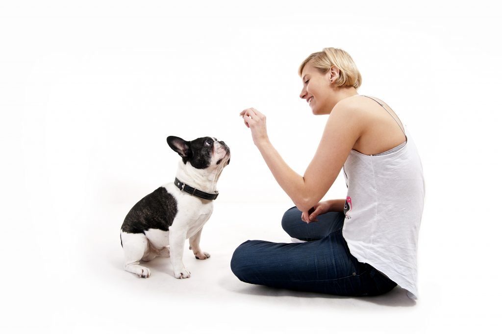 Natural Dewormer For Dogs