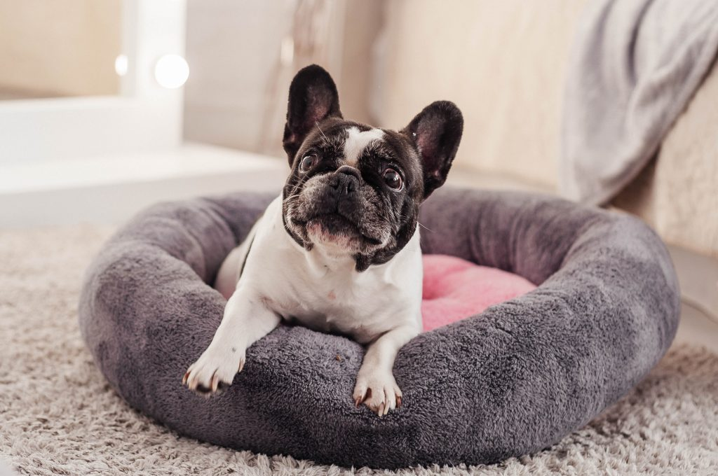 Best Dog Bed for French Bulldog 2